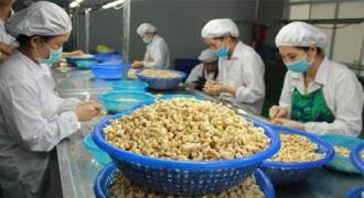 Hạt điều Việt Nam chiếm xấp xỉ 90% thị phần tại Mỹ